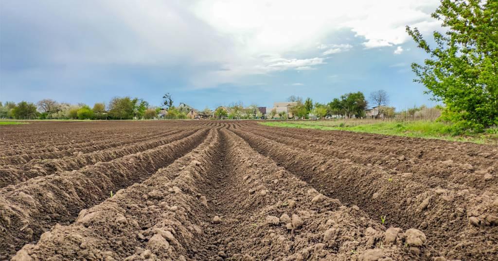 pH ดิน (Soil pH)
