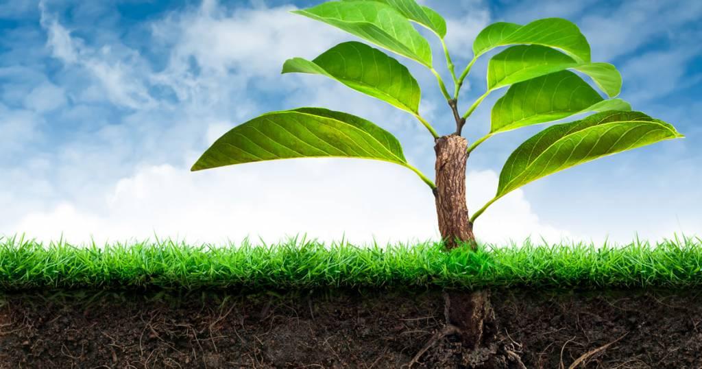 ค่า ph ของดินที่เหมาะสมต่อการปลูกพืช
